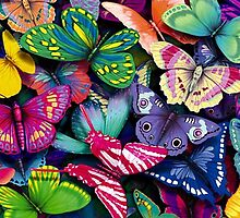Butterflies colors by borines