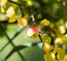 apple by arkadiafoto
