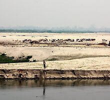 The stark landscape of the Brahmaputra River, Assam, India. by John Mitchell