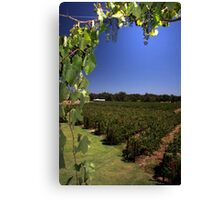"""Capel Vale Winery"" Margaret River, Western Australia Canvas Print"