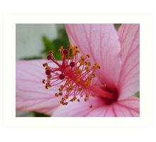 Pink Flower (Extreme Close-Up) Art Print