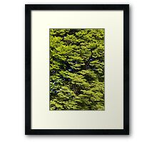 Time To Grow. Framed Print