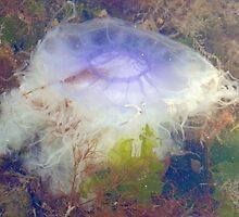 Joppa Jellyfish, Scotland by Pamela Baker