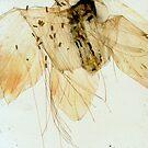 Angel II by elisabeth tainsh