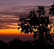 Sunrise with poinsettias by Andrea Rapisarda
