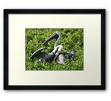 Brown Pelicans: A Romantic Moment Framed Print