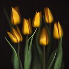 Autumn Tulips by Brian Haslam
