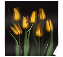 Autumn Tulips Poster