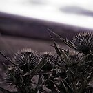 Thistles in The Peak District by Pinhead Industries