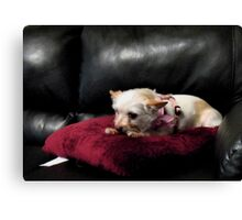 """Queen of the Couch""... prints and products Canvas Print"