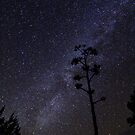 Century Stalk in the Milky Way by Lacy O.