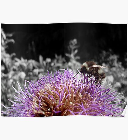 Busy Little Thistle Bee Poster