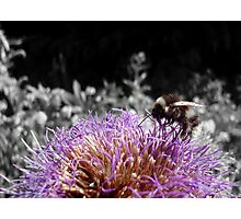 Busy Little Thistle Bee Photographic Print