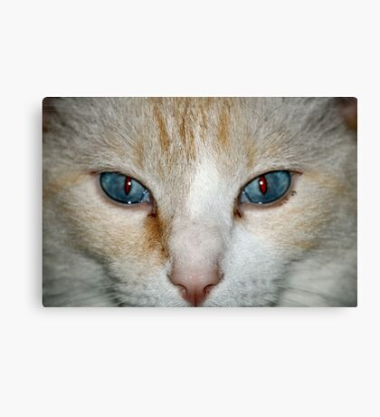 Blue Eyes looking at you Canvas Print