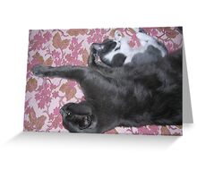 daddy cat and baby boy kitten Greeting Card