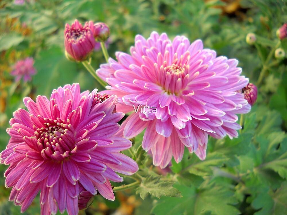 Pink flowers. by Vitta