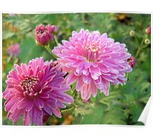 Pink flowers. Poster