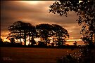 Dawn Light East Sussex: England UK by DonDavisUK