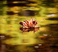 Leaves on the Eno by Alison Simpson