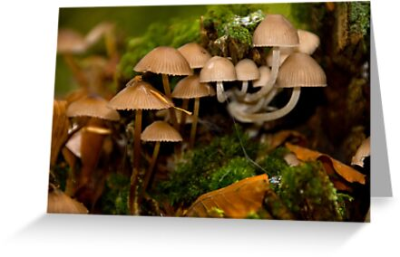 Small World by Mark Robson