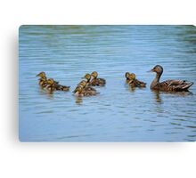 Nine little indians - Mallards Canvas Print