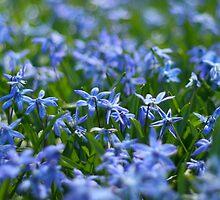 Spring by Nugrahini Tj.