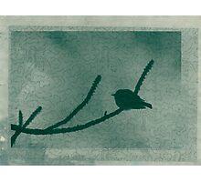 Little Bird On Pine Branch Photographic Print