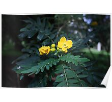 Wild Yellow Flower- Donnelly River Poster
