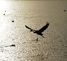 Sunset Great Blue Heron And Mergansers by Happystiltskin