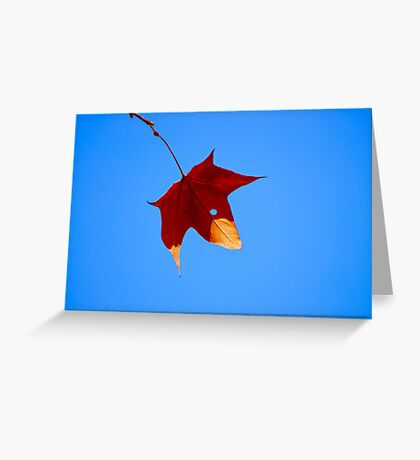 Maple Leaf in Fall Greeting Card