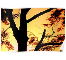 Jonquil dreaming - sunset at Nudgee Beach Poster