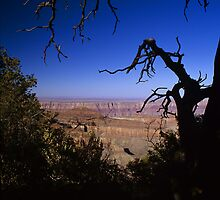 View From the North Rim, Grand Canyon, Arizona by Tom Fant