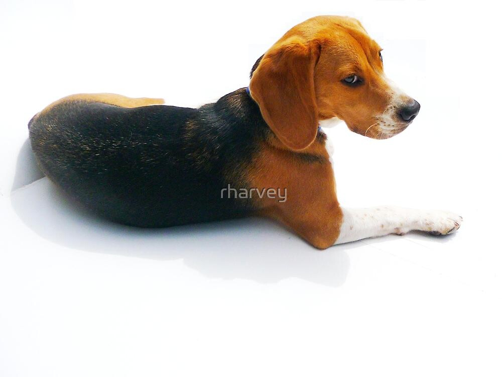 Fletcher Angled Pose by rharvey