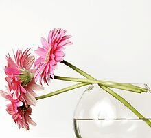 Pink Daisies in Vase by caqphotography