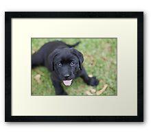 Archer Smiling Framed Print