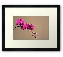 Magenta Orchids Framed Print