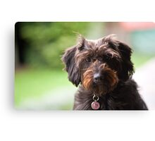 Serious Puppy Canvas Print