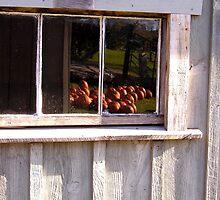 Pumpkins in the Window by peterrobinsonjr