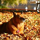 """""""Autumn Respite"""" by Fotography by Felisa ~"""