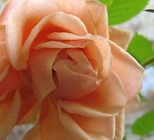 Stamina Apricot Rose by MarianBendeth