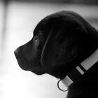 Archer in Profile by kristinagav