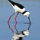 Australian Birds by Jenni Horsnell