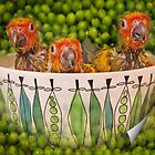 Peas in a Pod by Tainia Finlay