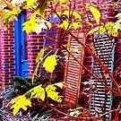 Garden Wall by James Kyle