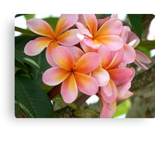 Frang time, aorbflowers,  Canvas Print