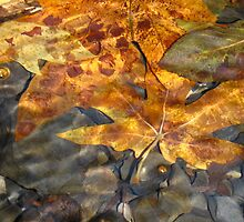 leaves under water... by kangarookid