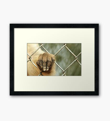 Let me out please....... Framed Print