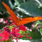 Orange Butterfly by grayjenny