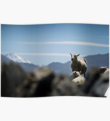 Sheep and Mountains, New Zealand Poster