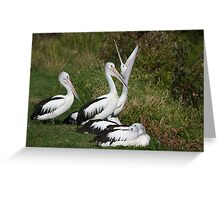Sunday Morning Pelicans Greeting Card
